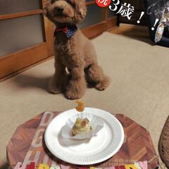 愛犬/3歳/ケーキ/誕生日/トイプードル/LIMIAペット同好会