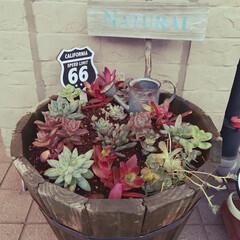 サビサビミニジョーロを置いてみたら.../多肉ちゃん寄せ植え/年季の入った鉢/色も変わった!