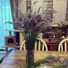 庭のラベンダー/ラベンダー収穫/ラベンダー/雨季ウキフォト投稿キャンペーン/令和の一枚 我が家の庭のラベンダーを収穫しました🌿 …