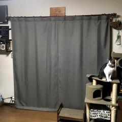 タックなしフラットタイプ/遮光生地/ハンドメイドカーテン 外の暑さと光を遮断! 遮光カーテン(タッ…