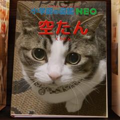 愛猫空たん/小学館の図鑑NEO 会社の人に教えてもらった‼️😍(3枚目)