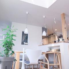 名作椅子/北欧デザイン/北欧インテリア/ダイニング/はじめてフォト投稿/わんこ同好会/... インテリアの写真を中心にUPしていきたい…