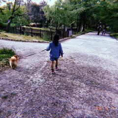 散歩/自然/ペット/グリーン/おでかけ 最近ふぅに慣れてきた彼女は お散歩が好き…