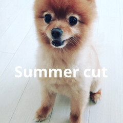4歳/summer/次女/ポメ/ペット 暑くなってきました! 我が家は今年からふ…
