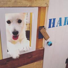 DIYプランナー/窓枠DIY/ゲージ/第2弾/ペット/ハンドメイド/... (3枚目)