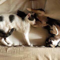 保護猫/LIMIAペット同好会/ペット/犬/わんこ同好会/猫/... 本当に寝てるの⁉︎って疑っちゃうぐらい躍…