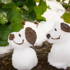 冬/スヌーピー/雪だるま/フォロー大歓迎/ハンドメイド/おでかけ/... スヌーピー雪だるま⛄️ 枯葉でお耳を• …