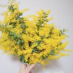 春/春の花/ミモザ/ミモザの花/LIMIAごはんクラブ/LIMIAおでかけ部/...  友達から⌒♡。. 大好きな𓂃大好きな𓂃…