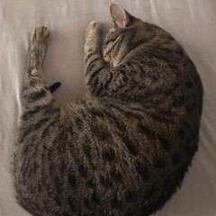 ペット 夜中ネコさん イタズラばっかりしてたから…(2枚目)