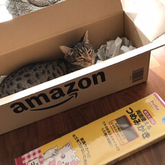 amazon段ボール/Amazon/つめみがき/ペット/猫/にゃんこ同好会 petioの両面使えるつめみがき 安いけ…