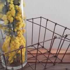 ミモザ/ビタミンカラー/花を飾る/黄色/お家の中/小さい春/... スーパーの切り花コーナー 格安で・わんさ…
