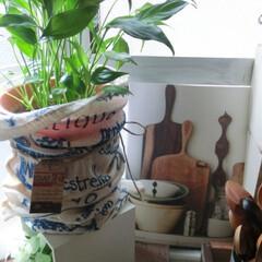 グリーンのある暮らし/観葉植物/キッチンインテリア/100均/グリーンポットカバー キッチン出窓にはリアルグリーン🍃100均…