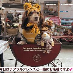 大阪/雑貨店/チアフルフレンズ/ガーデン雑貨/ミニチュアカートもあるよ/カートはお取り寄せ/...