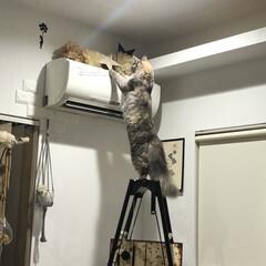 ハシゴ/アンティーク/ハンモック/キャットタワーDIY/キャットタワー/猫のいる暮らし/... 飾り棚をキャットタワーにDIY。 . .…(9枚目)