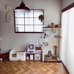猫のいる暮らし/猫とインテリア/にゃんこ同好会/LIMIAペット同好会/ねこと暮らすお部屋 ネコちゃんを買う前に、 和室をセルフプチ…(1枚目)