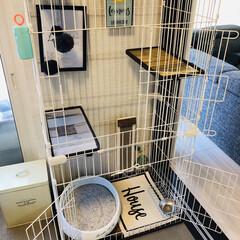 猫のいる暮らし/猫とインテリア/にゃんこ同好会/LIMIAペット同好会/ねこと暮らすお部屋 ネコちゃんを買う前に、 和室をセルフプチ…(10枚目)