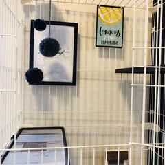 猫のいる暮らし/猫とインテリア/にゃんこ同好会/LIMIAペット同好会/ねこと暮らすお部屋 ネコちゃんを買う前に、 和室をセルフプチ…(9枚目)