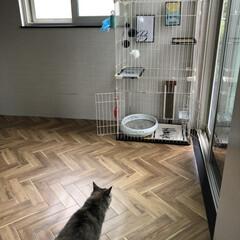 猫のいる暮らし/猫とインテリア/にゃんこ同好会/LIMIAペット同好会/ねこと暮らすお部屋 ネコちゃんを買う前に、 和室をセルフプチ…(7枚目)