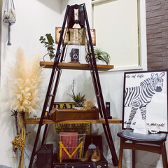 ハシゴ/アンティーク/ハンモック/キャットタワーDIY/キャットタワー/猫のいる暮らし/... 飾り棚をキャットタワーにDIY。 . .…(3枚目)