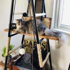 ハシゴ/アンティーク/ハンモック/キャットタワーDIY/キャットタワー/猫のいる暮らし/... 飾り棚をキャットタワーにDIY。 . .…(4枚目)