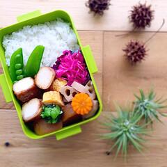 ヘルシー/おべんとう ⚫️根菜の煮物 ⚫️卵焼き ⚫️豆腐の肉…