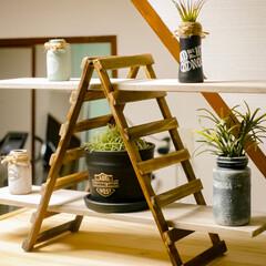 木板/木製フェンス/ラダーシェルフ/飾り棚/棚/DIY/... セリアのガーデニングフェンスを使った飾り…