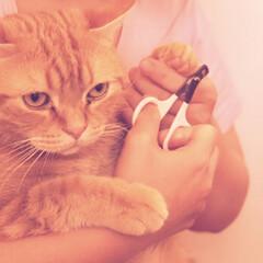 爪切り/LIMIAペット同好会/ペット/ペット仲間募集/猫/にゃんこ同好会 爪切りする時の顔ʬʬʬ😂