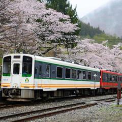 桜/日本唯一の茅葺き屋根の駅舎/駅舎/ローカル線/令和元年フォト投稿キャンペーン/令和の一枚/... 旅先で偶然通りかかった通り掛かった湯野上…