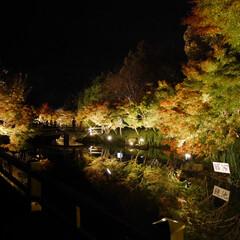 景色/秋/紅葉/風景/おでかけ/なばなの里/... 加工なし🍁