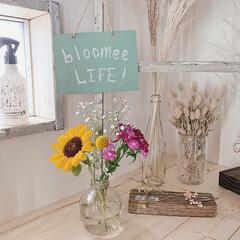 玄関インテリア/お気に入り/暮らしを楽しむ/bloomeelife/おすすめアイテム/LIMIAインテリア部/... パッケージの中は、  こんなに可愛い初夏…