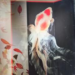夏祭り/夏対策/夏インテリア/季節インテリア 深水さんの展示会行ってまいりました 全て…(3枚目)