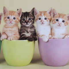 猫/気になるー コレはカレンダーのネコちゃんです 今日か…