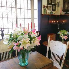 英語/レッスンルーム/ユリ/花 妻の実家からもらった百合の花が綺麗に開き…