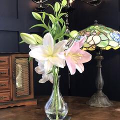 英語/レッスンルーム/ユリ/花 妻の実家からもらった百合の花が綺麗に開き…(2枚目)