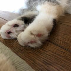 夏/お手入れ/ペット 皆さん、猫の指毛の処理どうしてますか?