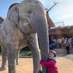 動物園/LIMIAおでかけ部/フォロー大歓迎/おでかけワンショット 動物園に行った時の写真 等身大の象の像。…