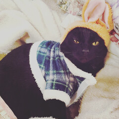 雑貨/100均/ダイソー/ファッション/ペット/黒猫/... 寒さには勝てないにゃ…
