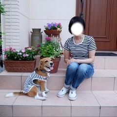 オソロコーデ/マリンコーデ/ビーグル犬/ビーグル/犬/いぬ/... シェリーとママ オソロコーデ♩¨̮⑅*♡(2枚目)