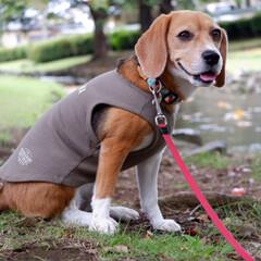 うちの子記念日/ビーグル犬/ビーグル/犬/いぬ/LIMIAペット同好会 昨日は4回目の 「うちの子記念日」でした…