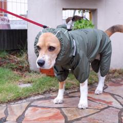マンダリンブラザーズ RAIN SUIT/KHAKI/カーキ L サイズ(Lightningコネクタ)を使ったクチコミ「雨は好きじゃないけど お散歩には行きたい…」