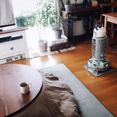 植物のある暮らし/アラジンストーブ/賃貸インテリア/インテリア/こたつ/冬/... こたつのある部屋☺️♡ 最近は仕事から帰…