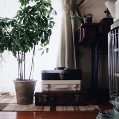 植物のある暮らし/ポカポカ日和/暖房器具/アラジンストーブ/秋/インテリア/... 本日もポカポカ日和😊☀︎ アラジンストー…