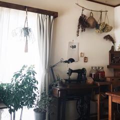 カーテンボックス/プラハン/暮らしのキロク/植物のある暮らし/レトロ/ドライフラワー/... 今日から10月突入しましたね。 植物の成…