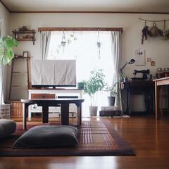 暮らしのキロク/ちゃぶ台/カーテンボックス/植物のある暮らし/レトロ/い草のラグ/... 部屋全体🏡 そろそろい草のラグは片付けて…