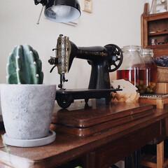 レトロ/古いミシン台/植物のある暮らし/サボテン/植物/インテリア/... 先日、サボテンと鉢を購入しました☺️⚐⚐…