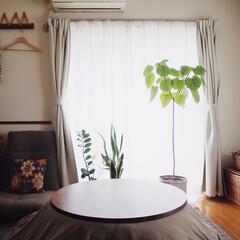 ブックシェルフDIY/植物のある暮らし/こたつ/DIY/雑貨/家具/... 昨日から寒さが増して来ました☃︎☃︎ 部…