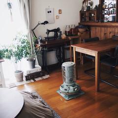 暮らしのキロク/観葉植物/レトロ/こたつ/おうち/木の家/... 秋冬支度☃︎☃︎☃︎ 今週は暖かくなるよ…