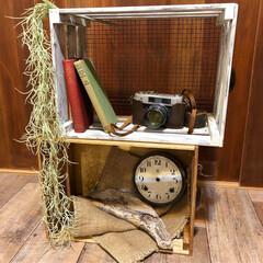 時計の文字盤/レトロカメラ/雑貨ディスプレイ/フェイクグリーン/古い物が好き/木製BOX/... DIYした木箱をどう使おうかなーと、いろ…