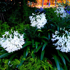 ビル街 ビル街に佇む白いお花に惹かれパシャリ☆ …