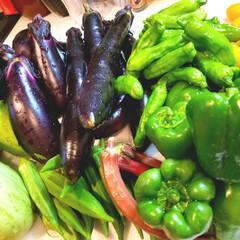 収穫体験/夏野菜 野菜収穫体験に行ってきましたぁp(^-^…